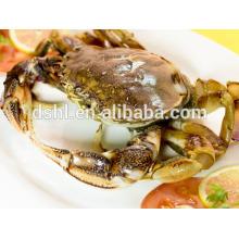Congelados de caranguejo de areia de caranguejo crab azul na venda