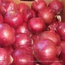 Oignon frais légumes en gros/frais de Chine