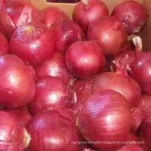Fresh Onion Wholesale /Fresh Vegetables From China