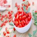 Goji berry/ Wolfberry /Lycium Barbarum /organic goji berries