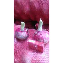 Nasik cebolla cebolla roja precio