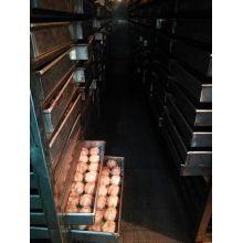 Bawang putih hitam kaya nutrisi membuat mesin fermentasi