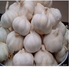 New Crop Jinxiang Fresh Garlic with White Skin, Pure White Garlic