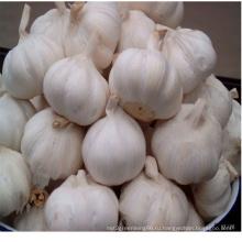 Новый урожай Jinxiang свежий чеснок с белой кожей, чистый белый чеснок