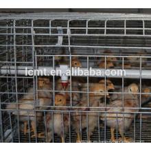 colocación de jaulas de batería para equipos de avicultura