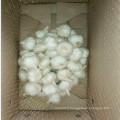 2016 fournissent de l'ail blanc pur et pur depuis la Chine