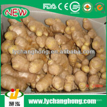 fresh ginger supplier/natural garlic fresh garlic