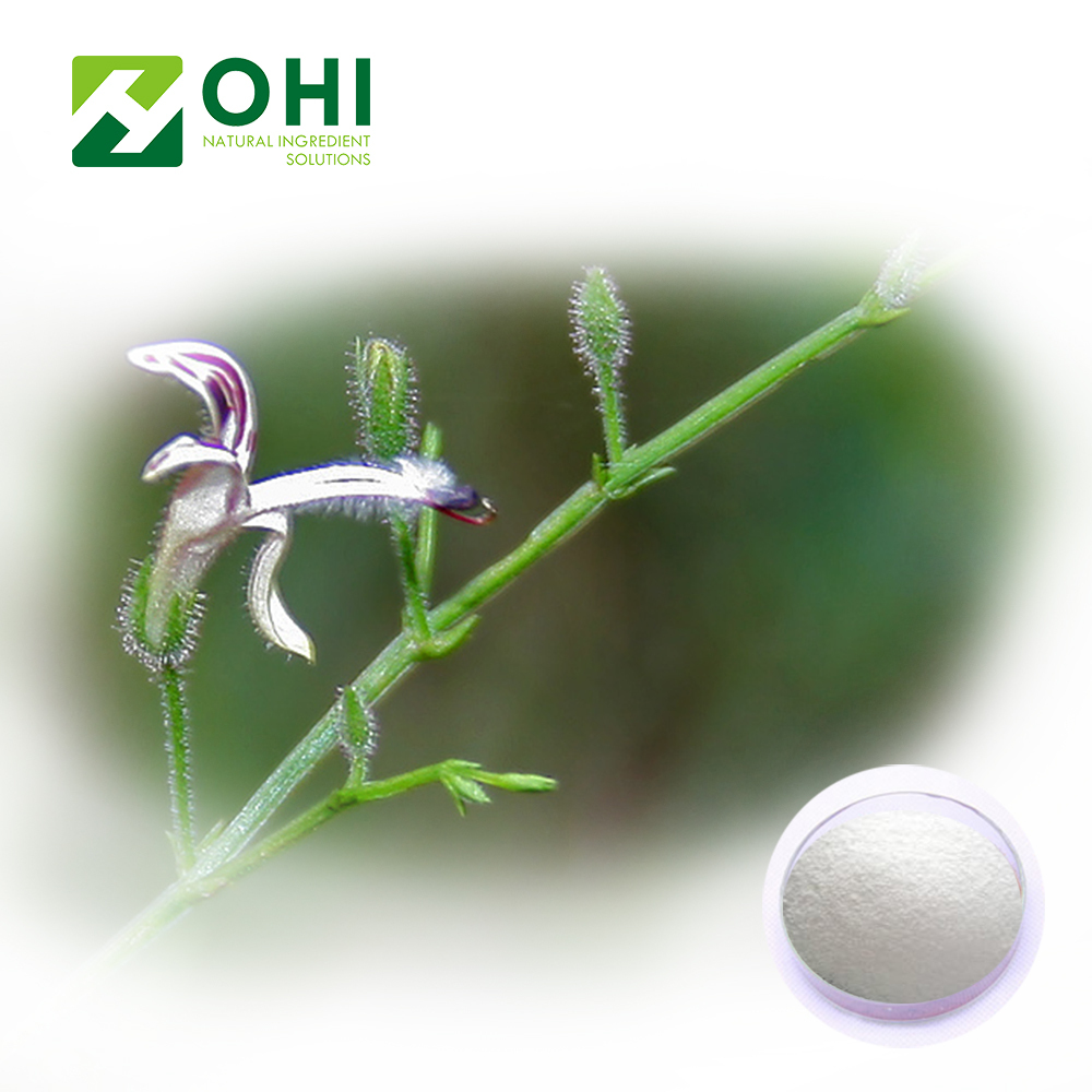 Andrographis paniculata extract powder