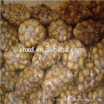 Fresh large potato with good quality
