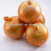 NON03 Xiai graines d'oignon jaune à haut rendement
