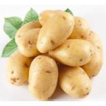 Patatas frescas en venta
