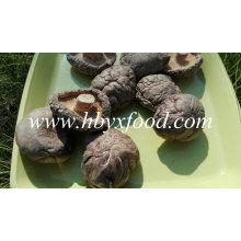 Getrockneter Gemüse-nahtloser Shiitake-Pilz