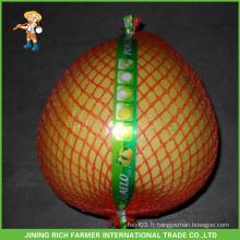 Fruit frais Pomelo frais de haute qualité - Jining Rich Farmer International Trade Co., Ltd