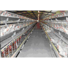 La cage à poulet en acier