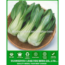 NPK01 Mande Hybride chinois pak choi graines, graines de xiaobaicai
