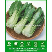 NPK01 Mande Híbrido chinês pak choi sementes, xiaobaicai sementes