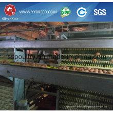 Automatic Chicken Cage Poultry Equipamento para Camadas
