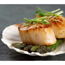 Hot Seliing Quality Dried Scallop Meat Scallops Column