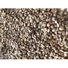Robusta Coffee/Arabica Green Coffee Beans