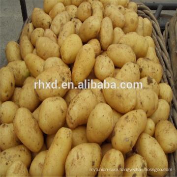 Fresh bulk potato with low prices