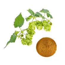 Low wholesale prices Hops flower extract powder