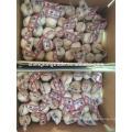 Pure white garlic 3P*80/carton China Jinxiang fresh garlic