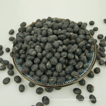 Big black bean with yellow kernel 2016 crop
