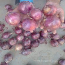 Sac de sac organique Shallots et oignons pour légumes / graines d'oignons rouges