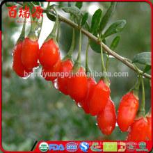 Venda quente seca goji berry goji goji berry anti-câncer de alimentos