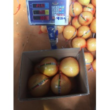 Fresh Good Qulality Pomelo