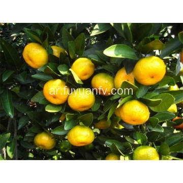 أفضل الأسعار Nanfeng Baby Mandarin with Good Quality