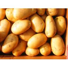 80-150 Высококачественный золотой свежий картофель