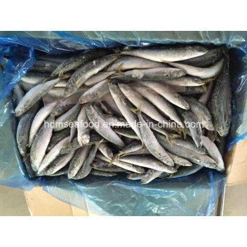 Морепродукты мороженой рыбы Bonito (Bullet tuna)