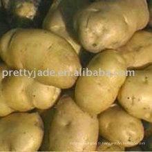 Exportateur chinois de pommes de terre fraîches de 2014