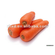 2014 new season carrot seeder natural