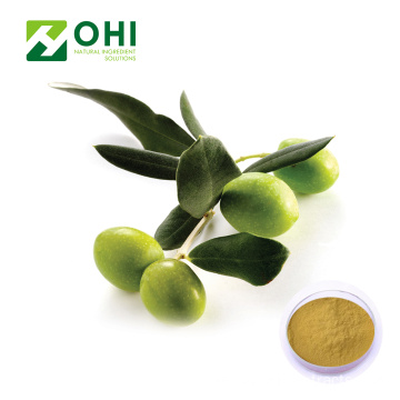 Olive Leaf Extract Oleuropein Pulver