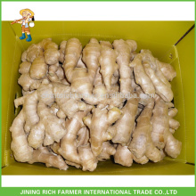 Low Market Price for Export Farmer Fresh Ginger Chinese Ginger 150g,250g and up