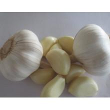 Hochwertiger frischer Knoblauch und geschälter Knoblauch