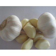 High Quality Fresh Garlic and Peeled Garlic