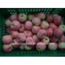 Verkaufen 2011 shanxi fuji apfel