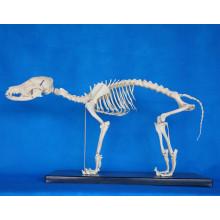 High Quality Animal Dog Skeleton Model for Biology Teaching (R190112)