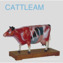 Cattle Acunpuncture Model