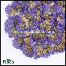 FT-008 Myosotis Sylvatica ou oubliez-moi pas la tisane parfumée de fleur de vente en gros de parfum