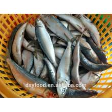 Peixe de marisco sardinha por atacado congelado