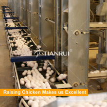 Cultivo de un sistema de recolección de huevos de gallina en el puerto