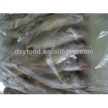 Mexico Yellow Croaker Fish Price
