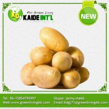 Palatable Cheap Fresh Potatoes