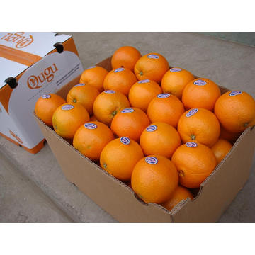 Fresh Navel Orange