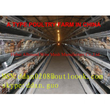 Hot Sale Broiler Feeding System For Poultry Farm