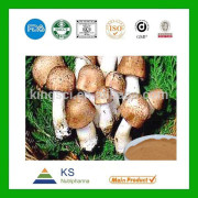 China Agaricus Blazei Extract manufacturer Agaricus Blazei Mushroom Extract